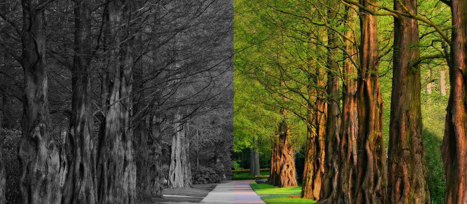 Daha yeşil, daha temiz bir dünya için…
